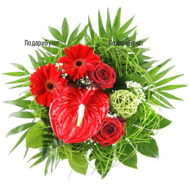 Order bouquet of anthuriums and gerberas to Sofia, Plovdiv, Varna, Burgas