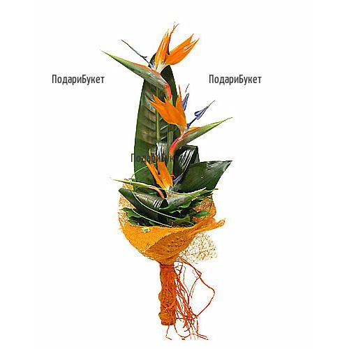 Send exotic bouquet of Strelitzia to Sofia, Plovdiv, Varna, Burgas
