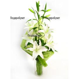 Send bouquet of white lily to Sofia, Plovdiv, Varna, Burgas
