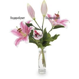 Send pink lily to Sofia, Pleven, Varna