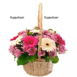 Send flower basket - gerberas and chrysanthemums to Sofia, Plovdiv