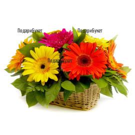 Send a basket with gerberas and greenery to Sofia, Plovdiv, Varna, Ruse