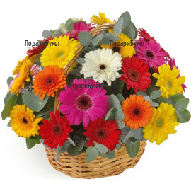 Order basket with flowers, multicoloured gerberas and greenery to Sofia