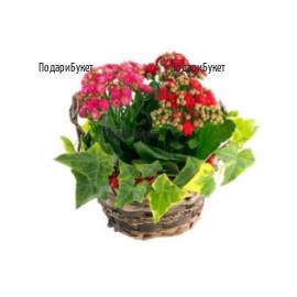Онлайн поръчка на цветя и кошници с растения и цветя в София, Пловдив