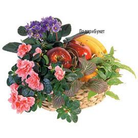 Send a basket with pot plants and fruits to Sofia